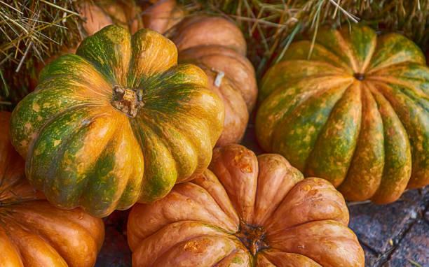autumn harvest yellow and orange ribbed pumpkin closeup background vegetable design - pumpkin pie стоковые фото и изображения
