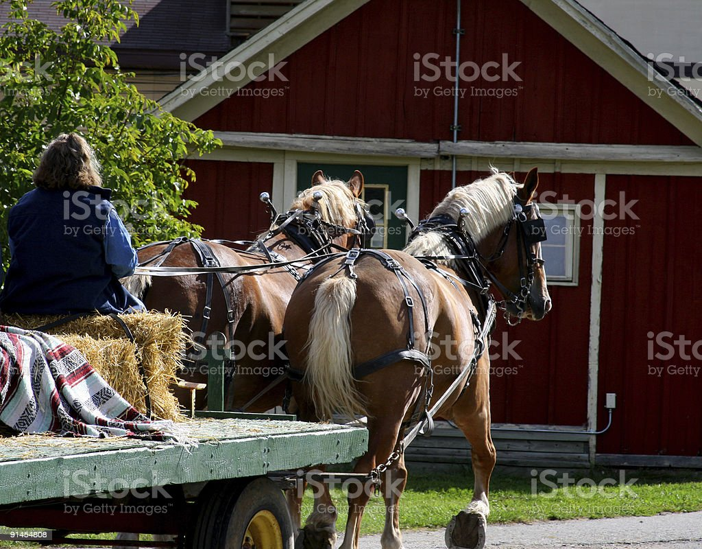Autumn Hayride: Wagon Pulled by Draft Horses stock photo