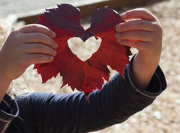 Autumn heart stock photo