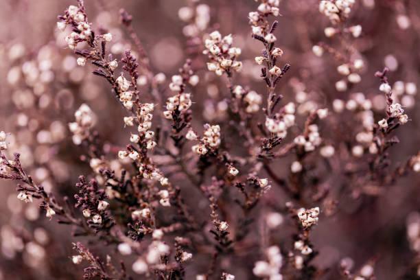 Herbst-Heide Hintergrund – Foto