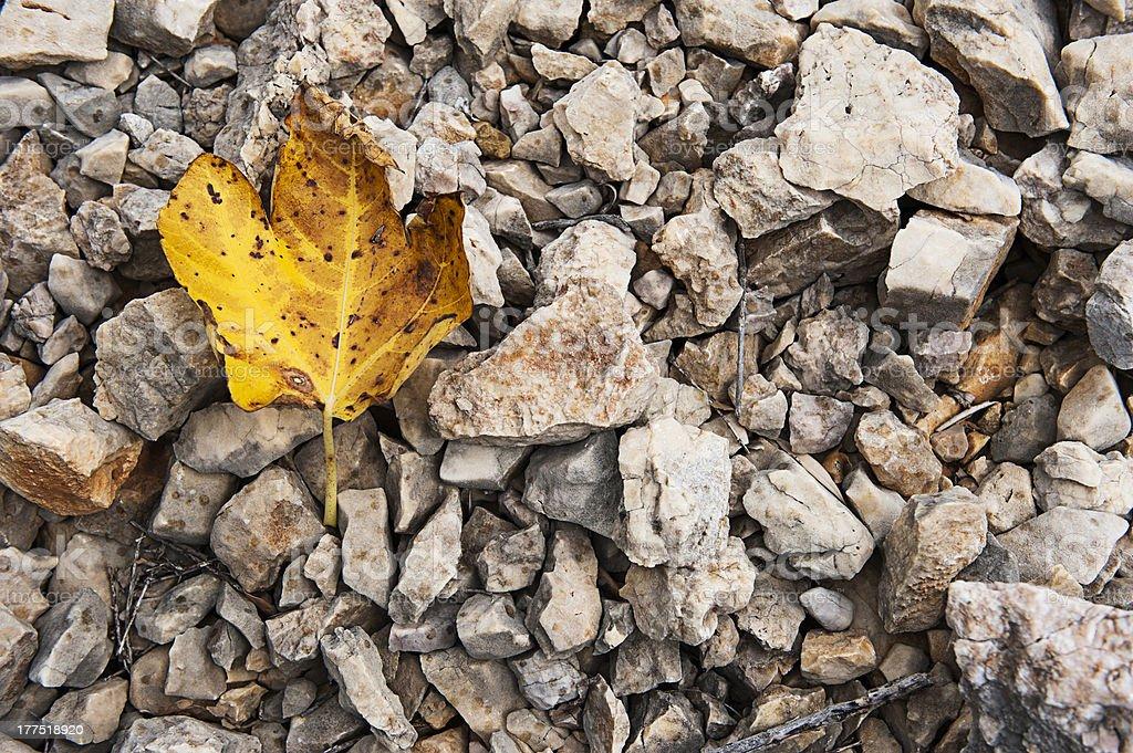 autumn, herbst stock photo