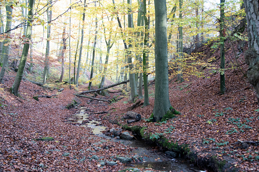 Autumn hike in Extertal on the Patensteig. The path leads along the Siekbach and Rickbach. The hiking trail is in the nature park Teutoburgerwald and Eggegebirge.