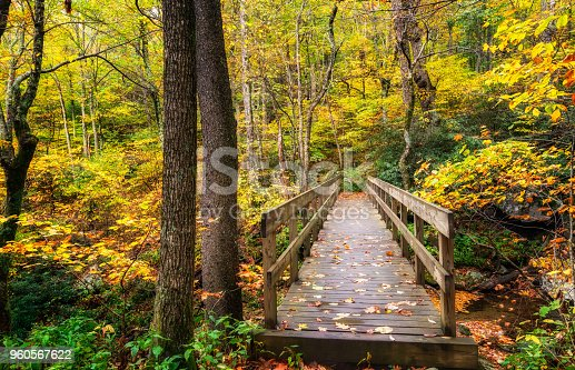 The Tanawha Trail stretches for a number of miles, paralleling the Blue Ridge Parkway on Grandfather Mountain.  There are a number of these wooden bridges on the trail.