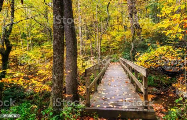 Photo of Autumn hike on the Tanawha Trail off the Blue Ridge Parkway