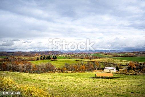 Japan, farm, Autumn, Hokkaido, Japanese Larch