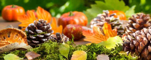 Autumn hokkaido pumpkin with decoration picture id1176944851?b=1&k=6&m=1176944851&s=612x612&w=0&h=dc2fluhnnk1dgdjk1 nfx nv1rvip dkxuin18p4noc=