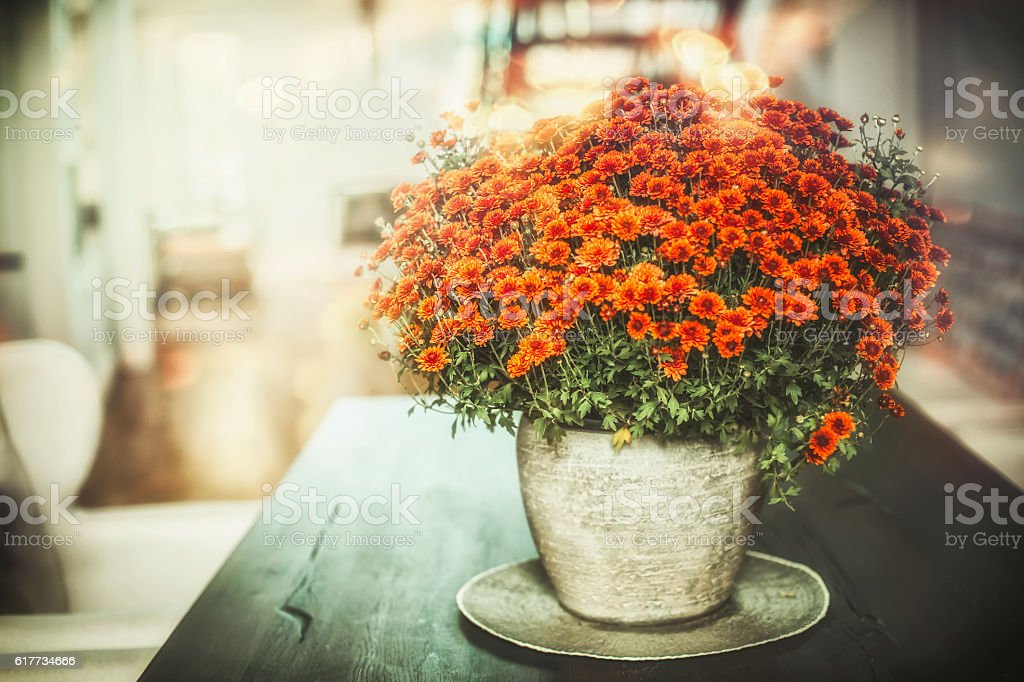 Autumn home flowers in vase in living room stock photo
