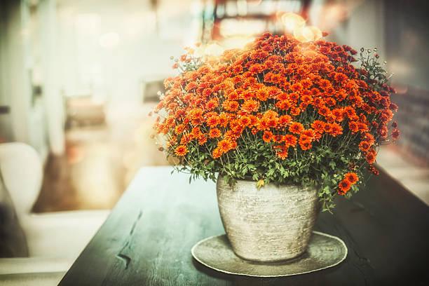 autumn home flowers in vase in living room - chrysant stockfoto's en -beelden