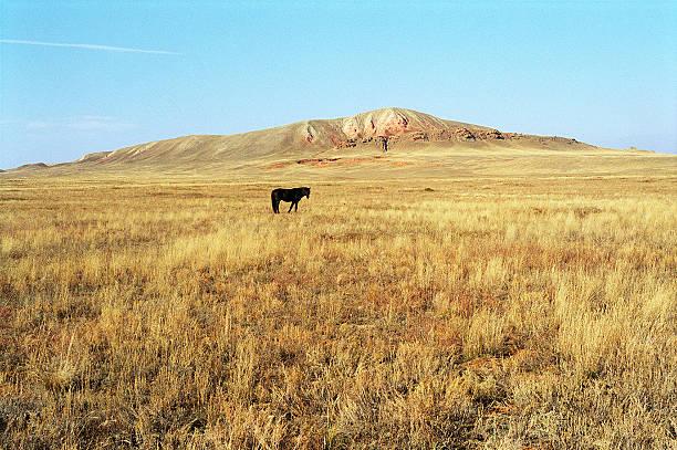 jesień.  koń paść się w step. - półpustynny zdjęcia i obrazy z banku zdjęć