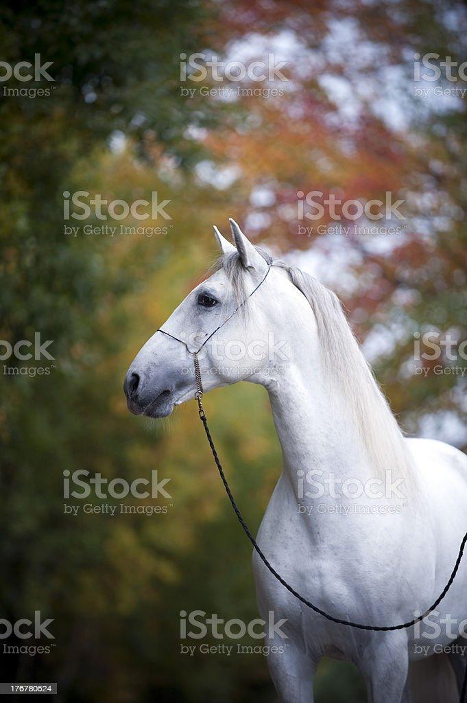 autumn horse stock photo