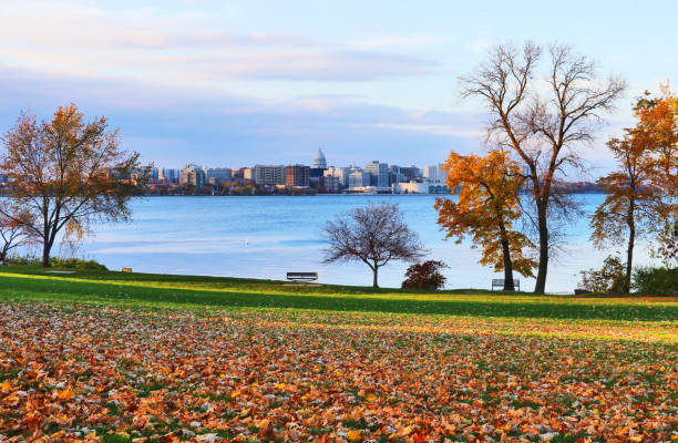Autumn in a city. City of Madison downtown skyline with state capitol building dome from Olin city park across the Monona lake with autumn colored trees and fallen leaves on a green grass lawn on a foreground. Midwest USA nature background. madison wisconsin stock pictures, royalty-free photos & images