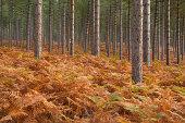 istock Autumn in Arne Forest. 182465433