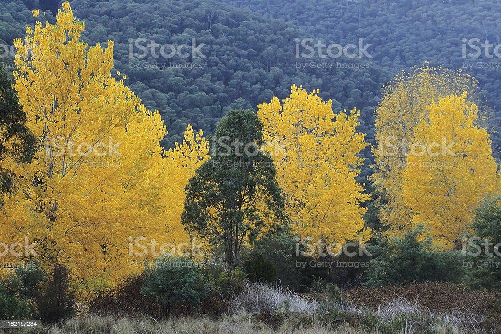 Autumn in Australia stock photo