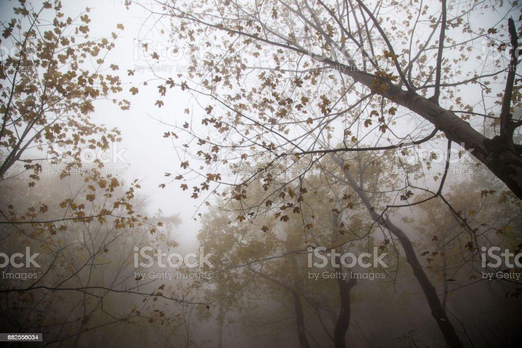 Herbst in Bayern, Deutschland – Foto