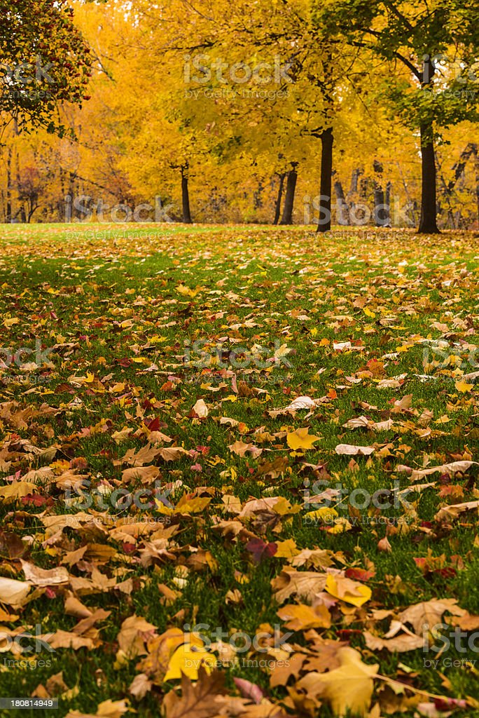 Autumn in Boise royalty-free stock photo