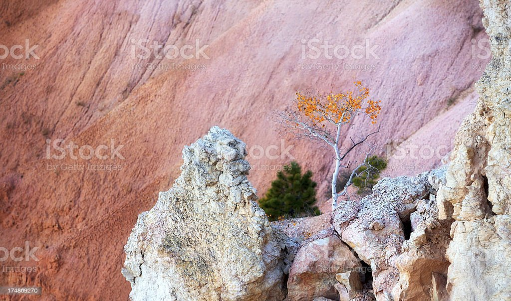 Autumn in Bryce canyon royalty-free stock photo