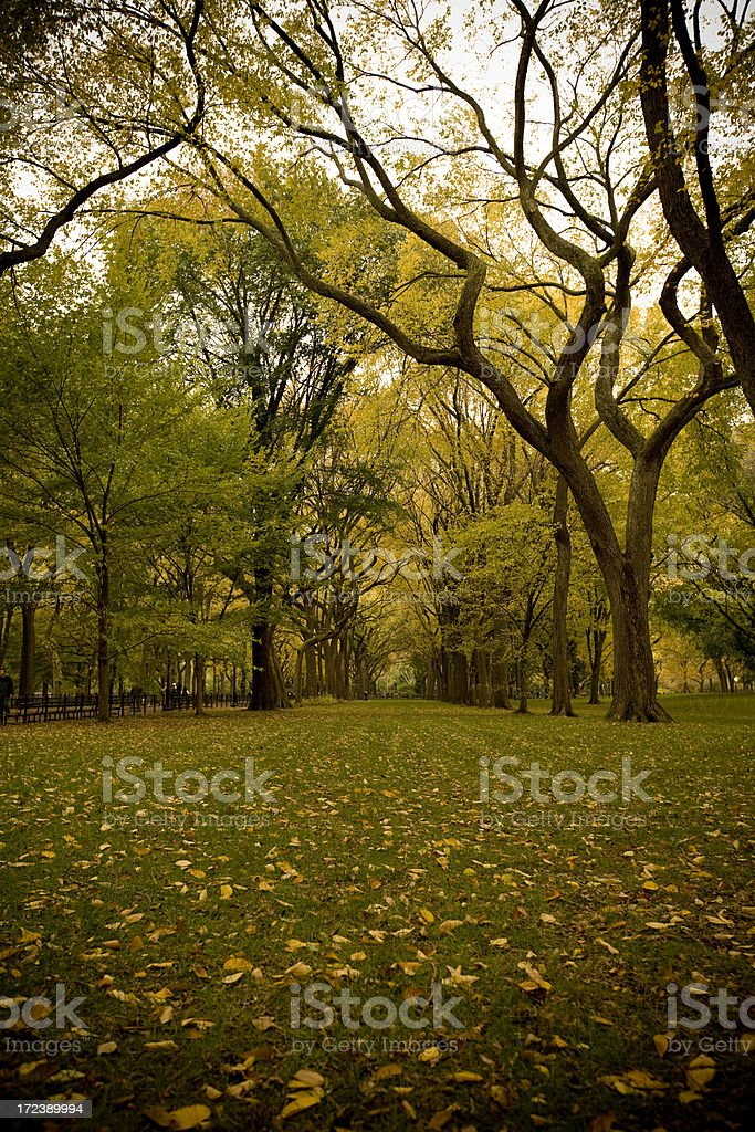 Autumn in Central Park royalty-free stock photo