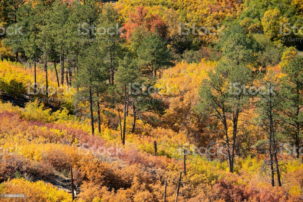 Autumn In Colorado Backcountry stock photo