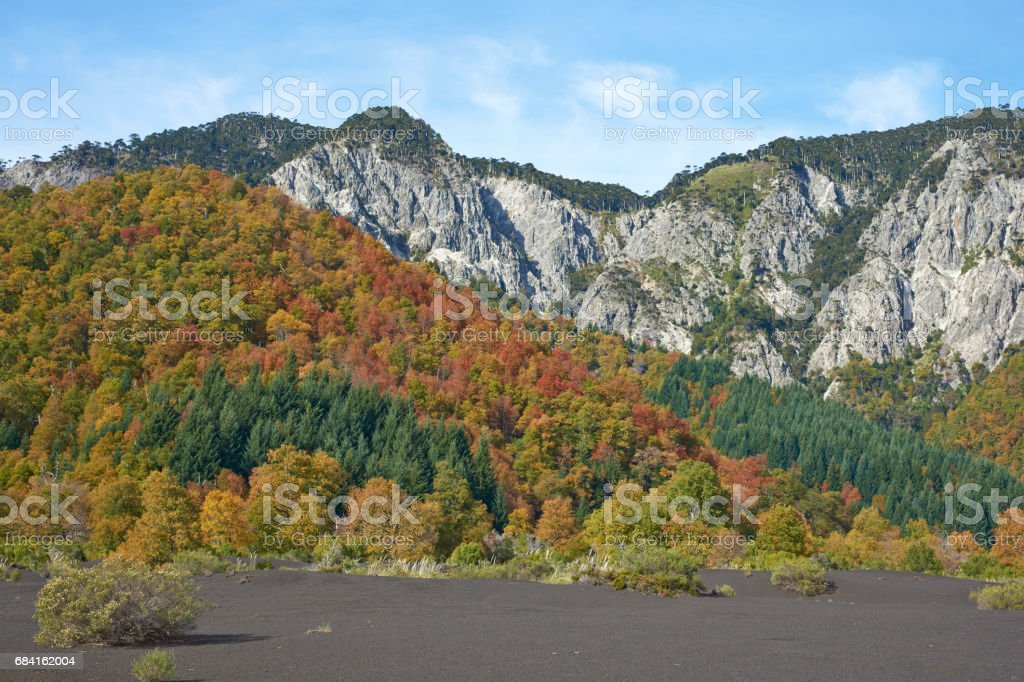 Automne au Parc National de Conguillio, Chili photo libre de droits