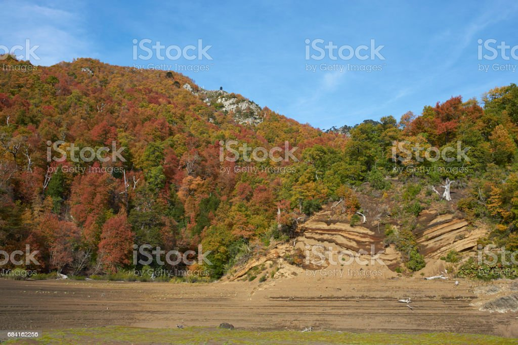 Autumn in Conguillio National Park, Chile foto stock royalty-free