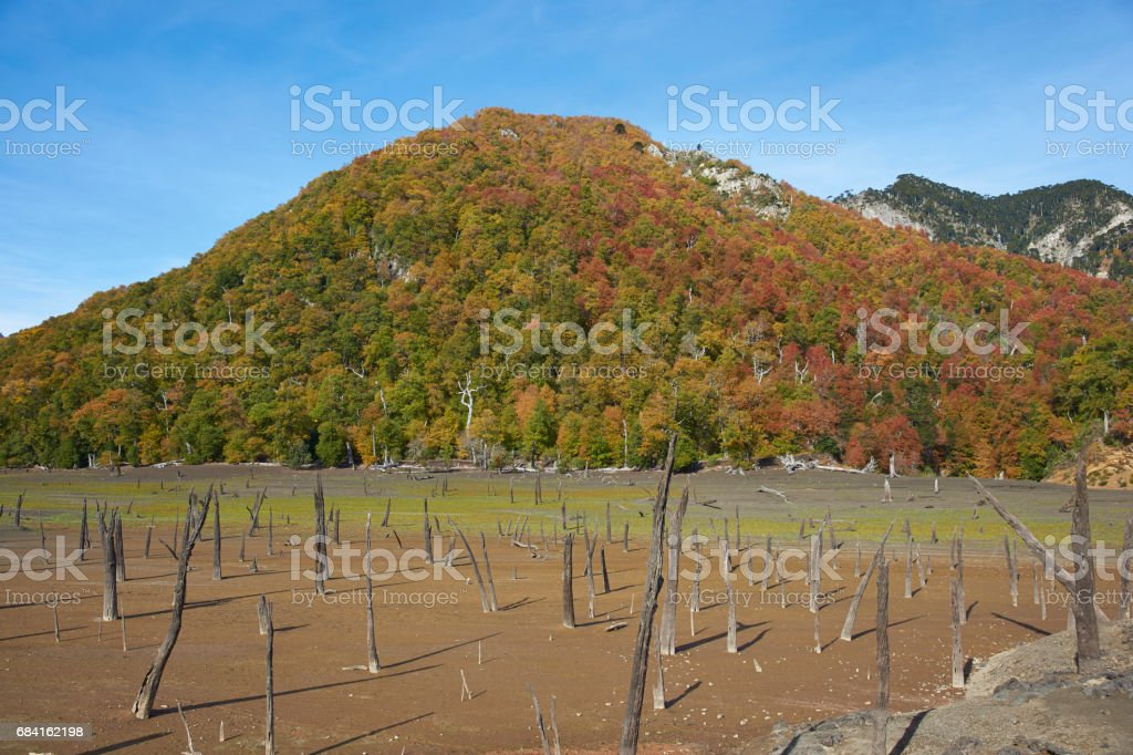Autumn in Conguillio National Park royalty free stockfoto