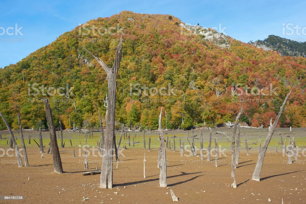 Autumn in Conguillio National Park royalty-free stock photo