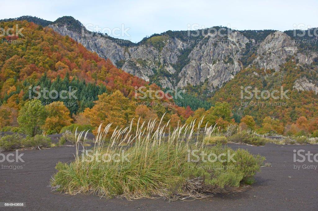Autumn in Conguillio National Park Lizenzfreies stock-foto