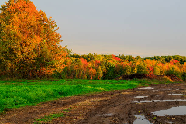 Autumn in field of Hudson Valley at dusk on rainy day. stock photo