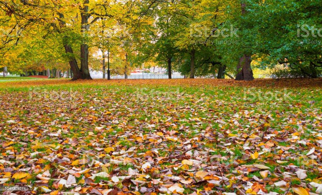 Autumn in Gothenburg stock photo