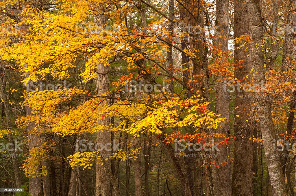 Autumn in Great Smoky Mountains Cades Cove stock photo