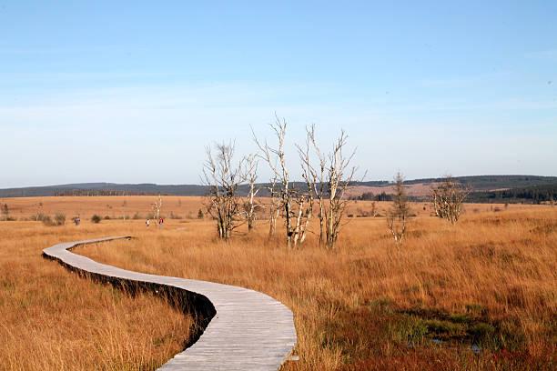 herbst in hohes venn-naturpark - hohes venn stock-fotos und bilder
