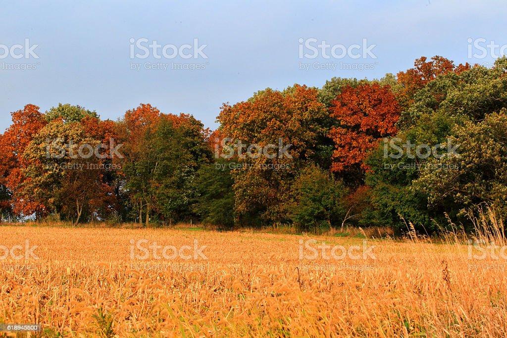 Autumn in Illinois 2016 #30 stock photo