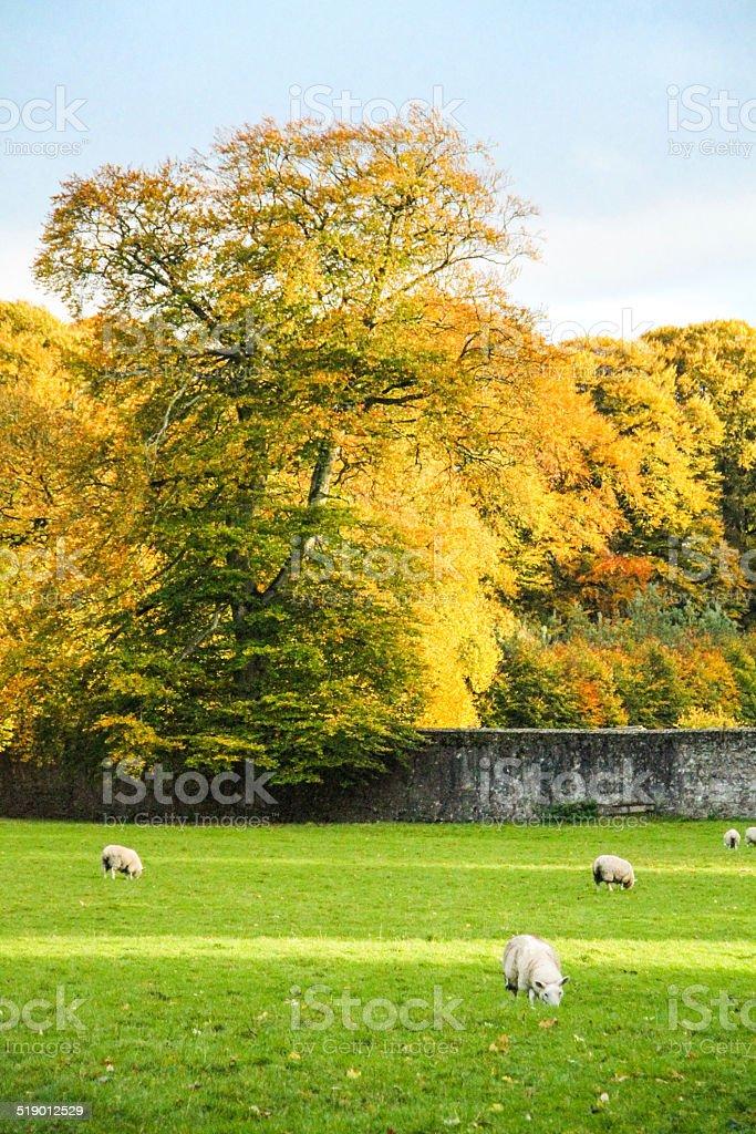 Autumn in Ireland stock photo