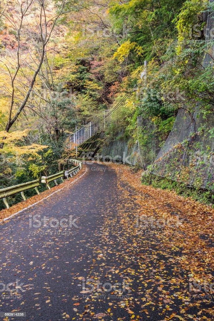 autumn in Iya valley japan stock photo