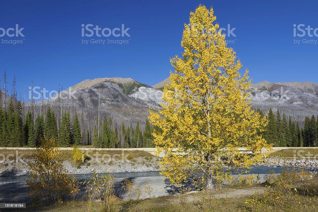 Autumn in Kootenay National Park, British Columbia, Canada stock photo