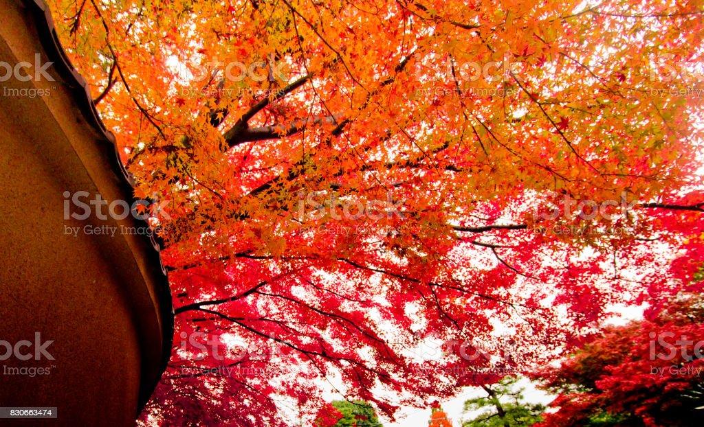 Autumn in Kyoto , Japan. stock photo