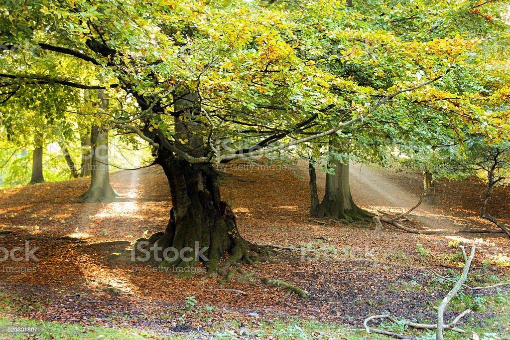 Autumn in Marselisborg forest stock photo