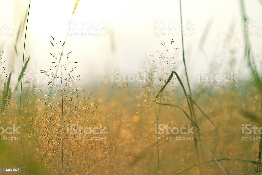 Autumn in Meadow royalty-free stock photo