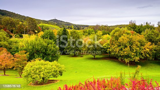 istock Autumn in Mount Lofty botanic garden 1208578743