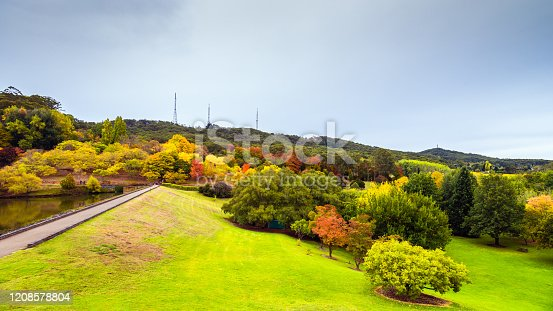 istock Autumn in Mount Lofty botanic garden 1208578804