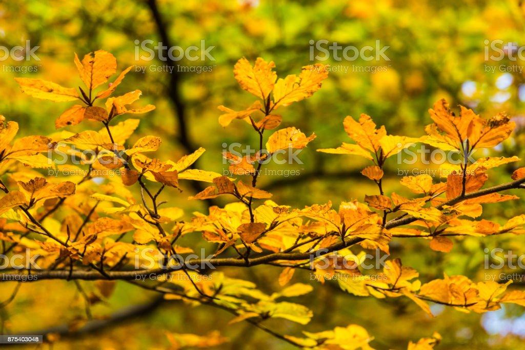 Autumn in mountains stock photo