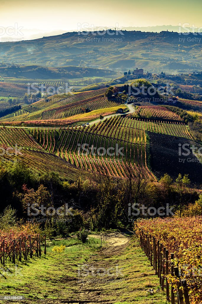 Autumn in northern italy region called langhe with colorful wine foto stock royalty-free