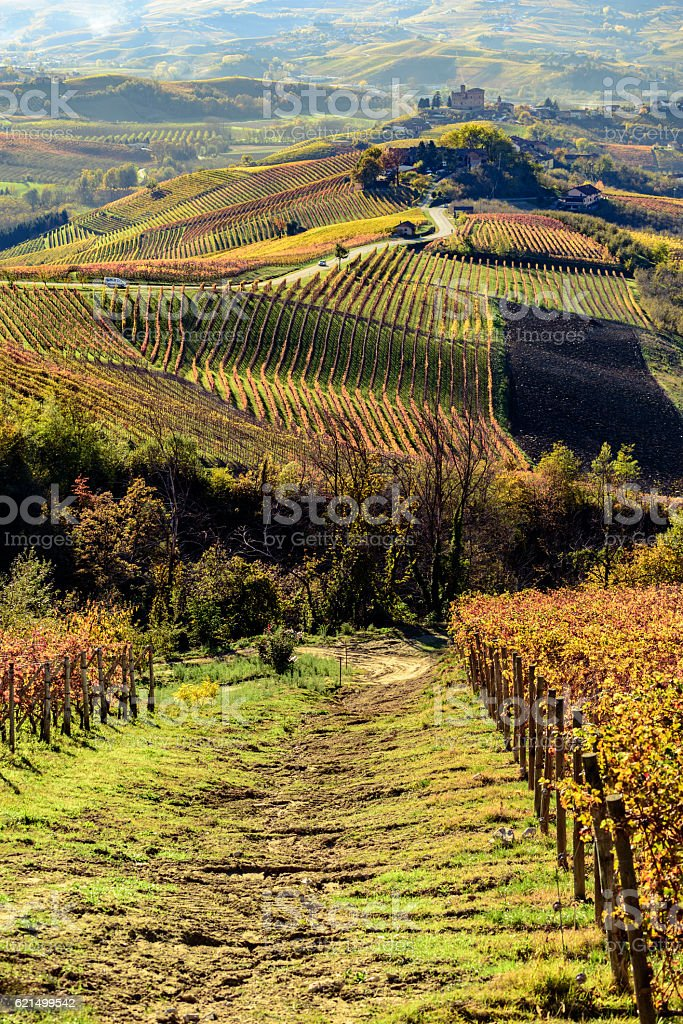 Autumn in northern italy region called langhe with colorful wine photo libre de droits