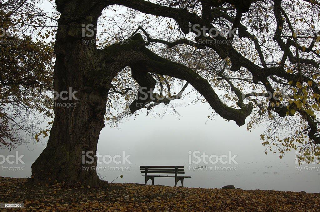 Autumn in Nymphenburg stock photo