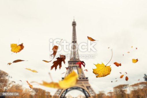 Autumn leaves falling from the trees in Paris.