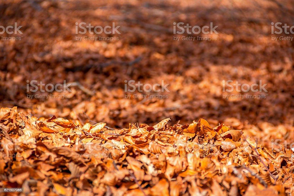 Autumn in park and forest photo libre de droits