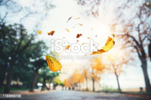 Autumn background with falling leaves (Segovia, Spain).