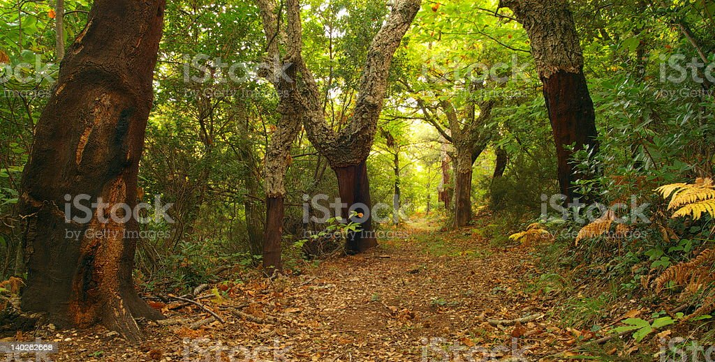 Autumn in provence forest. royalty-free stock photo