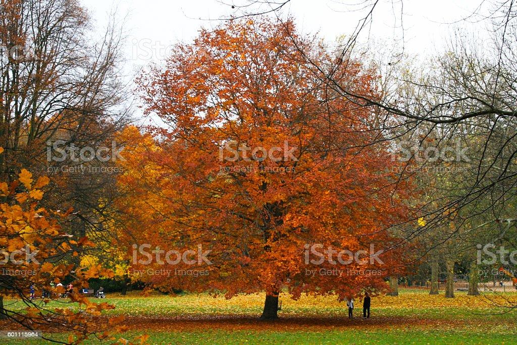 Autumn in red – Foto