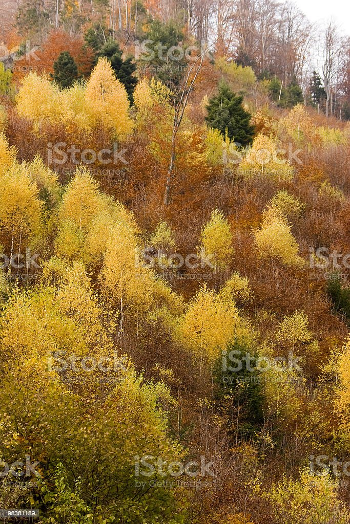 Autunno In Romania foto stock royalty-free